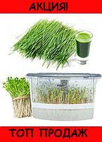 Автоматический проращиватель семян!Хит цена