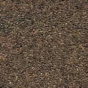 Семена фацелии,медонос и сидерат - фацелия