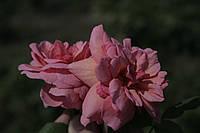 Принцеса Олександра Кентська, фото 3