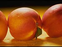 Саджанці абрикоса ПОЛУПЛОИД середнього терміну дозрівання