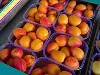 Саджанці абрикоса ВЕНДЕР КІТ (дворічні) понад ранній термін дозрівання