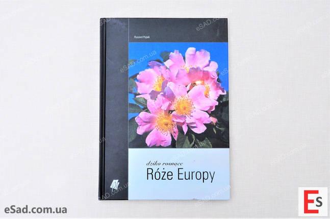 """Каталог """"Дикоростучі троянди Європи"""", фото 2"""