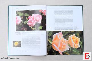 Троянди. Сорти і різновиди в описах і фотографіях , фото 2