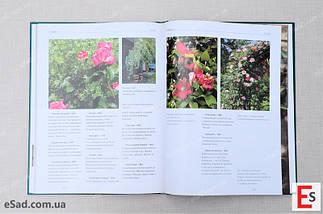 Троянди. Сорти і різновиди в описах і фотографіях , фото 3