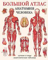 Большой атлас анатомии человека: лучшие в мире анатомические таблицы.