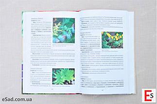 Багаторічники в вашому саду. Повний довідник по догляду і розведення., фото 2