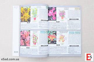 Все о комнатных растениях, фото 2
