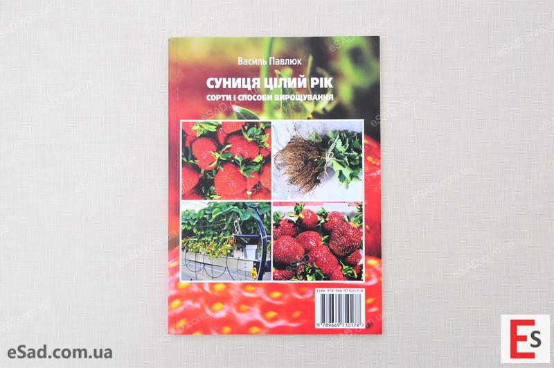 Суниця цілий рік – сорти і способи вирощування