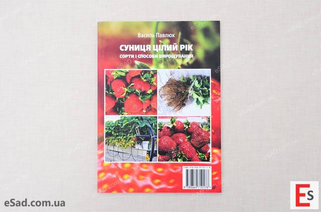 Суниця цілий рік – сорти і способи вирощування, фото 2