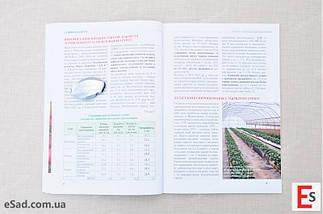 Суниця цілий рік – сорти і способи вирощування, фото 3