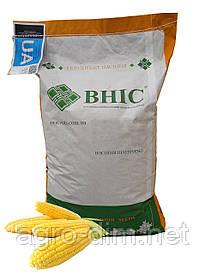 Насіння кукурудзи Амарок 290