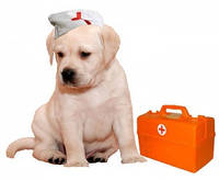 Вызов ветеринара на дом Днепропетровск