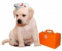 Вызов ветеринара на дом Индустриальный район
