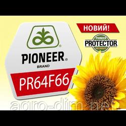 Насіння соняшника Піонер PR64F66 (ПР64Ф66)