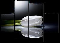 Модульные картины Белый тюльпан на черном