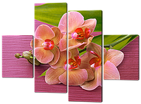 Модульная картина Орхидея нежно розового цветв