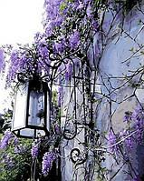 Раскраска по цифрам Mariposa Сиреневый фонарь (MR-Q442) 40 х 50 см