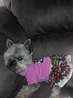 Комбинезон для собак и кошек  из велюра в стиле Матрешка с юбочкой