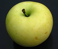 Яблоня Белый Налив. (ММ.106). Летний сорт.  , фото 1