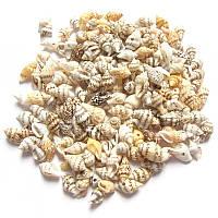 Бусины - ракушки (размер 0,5-1,5 см )в упаковке 30-35 г