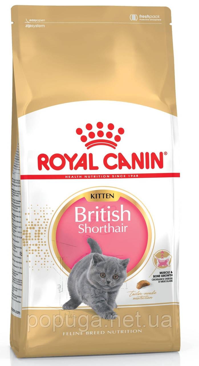 Корм Royal Canin British Shorthair Kitten для котят породы Британская короткошерстная, 400 г