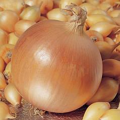 Цибулю севок Голиат Голландія 0,5 кг