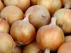 Цибулю севок озимий Августа Голландія 0,5 кг