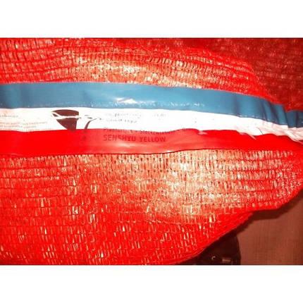 Лук севок озимый Сеншуй Голландия 0,5кг, фото 2