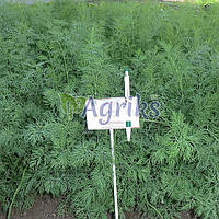 Семена укропа Анетте Аgri Saaten от 100 г