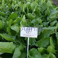 Семена шпината Полиден F1 Аgri Saaten 200 г