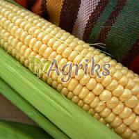 Семена кукурузы сахарной Дейнерис (Барселона) F1 МНАГОР от 1 000 шт