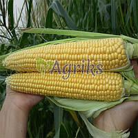 Семена кукурузы сахарной Тести Дрим F1 Аgri Saaten 5 000 шт