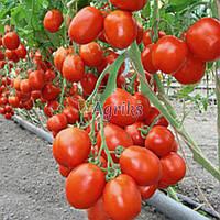 Семена томата детерминантного Бенито F1 Bejo 5 г