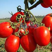 Семена томата детерминантного Тенорио F1 Clause 5 000 шт