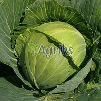 Семена капусты б/к Пасадена F1 Lark Seeds 1 000 шт