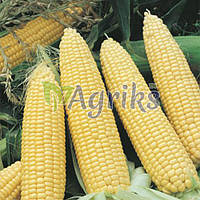 Семена кукурузы сахарной Nasko Zea 80/24 F1 Nasko 30 000 шт
