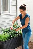 Подовжений горщик для квітів, рослин, трав та овочів EASY GROW графіт (Keter), фото 3