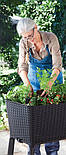 Подовжений горщик для квітів, рослин, трав та овочів EASY GROW графіт (Keter), фото 4