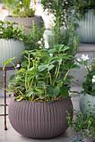Квітковий горщик COZIES M фіолетовий (Keter), фото 3