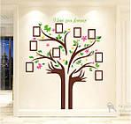Самоклеющаяся  наклейка  на стену  Дерево и рамки (172х145см), фото 5
