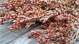 Сорго натуральне для композицій, сухоцвіт, 1 шт, h-55 см, 25 грн, фото 4
