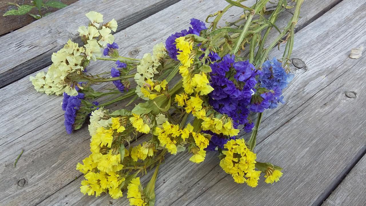 Статиця (лимоніум) натуральний сухоцвіт, мікс кольорів, 6 гілок в букеті, 20 грн