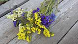 Статиця (лимоніум) натуральний сухоцвіт, мікс кольорів, 6 гілок в букеті, 20 грн, фото 2