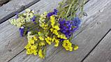 Статиця (лимоніум) натуральний сухоцвіт, мікс кольорів, 6 гілок в букеті, 20 грн, фото 3