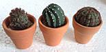 Набор кактусов искусственных (12 шт  в уп), фото 6