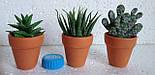 Набор кактусов искусственных (12 шт  в уп), фото 7