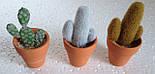 Набор кактусов искусственных (12 шт  в уп), фото 5