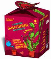 Растения-хищники, Дионея, Набор юного исследователя, Зирка (9786176341031)