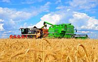 Перевозка пшеницы зерновозами