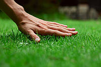 Выбираем правильные удобрения для газонов